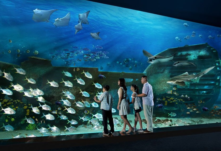 resorts world sentosa marine park to open on 22 november a mere mortal